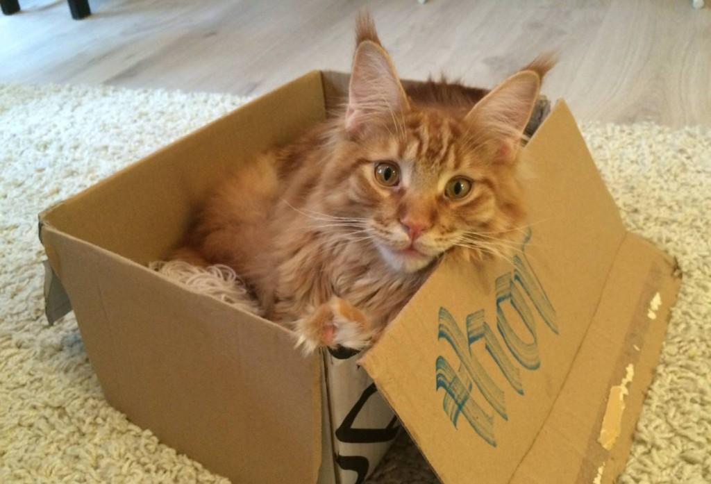 Katten_Tor