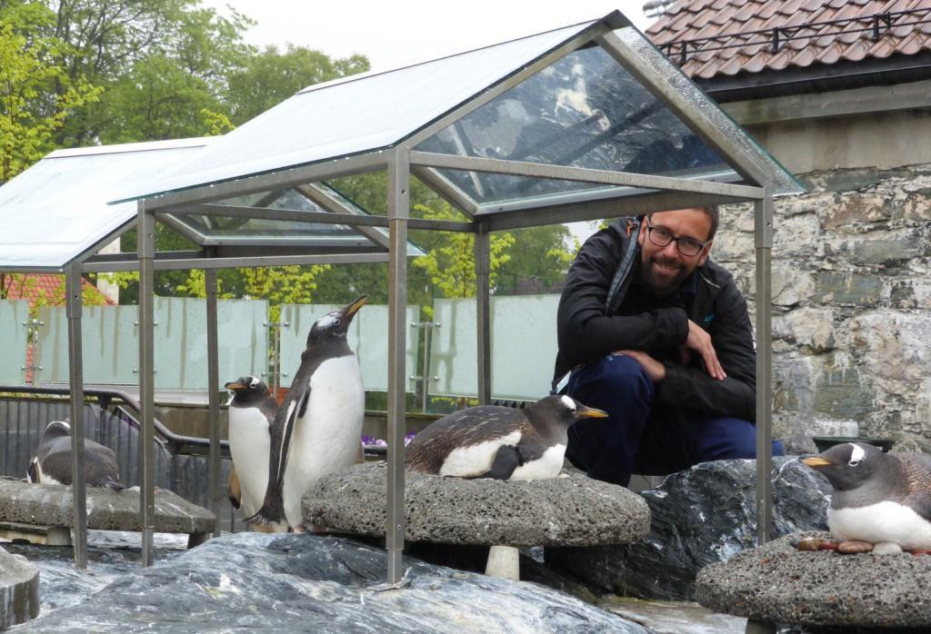 Joachim Ekeli er pingvinansvarlig og også fødselshjelper for den nyankomne kyllingen. Foto: Eva Johansen