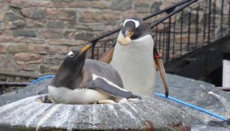 Akvariet melder seg ut av dyreparkorganisasjon