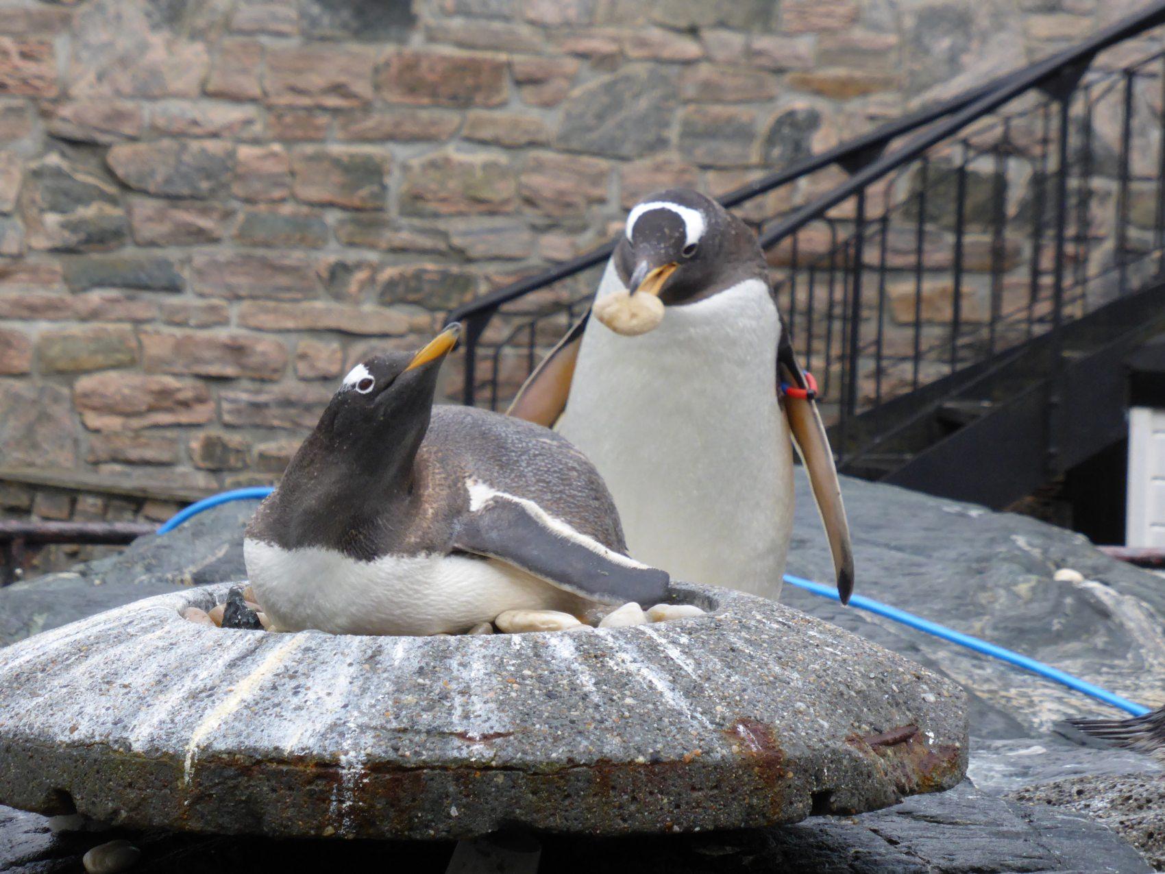 Det legger gjerne en stein til byrden at Akvariet må melde seg ut av dyreparkorganisasjon fordi de må oppgradere betydelig før de kan bli medlem igjen. Foto Eva Johansen