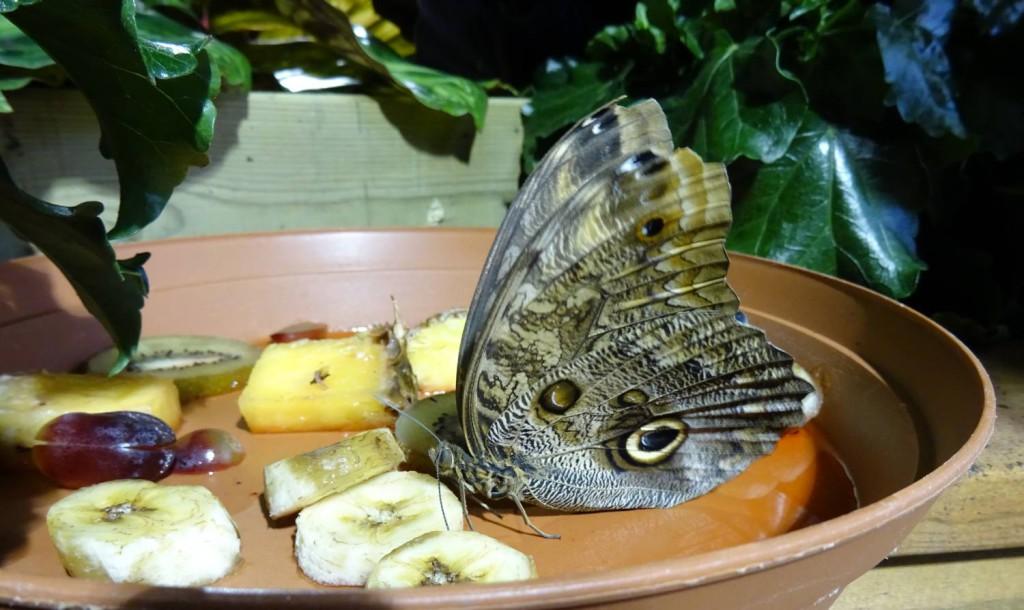 Akvariet_sommerfugl_mat