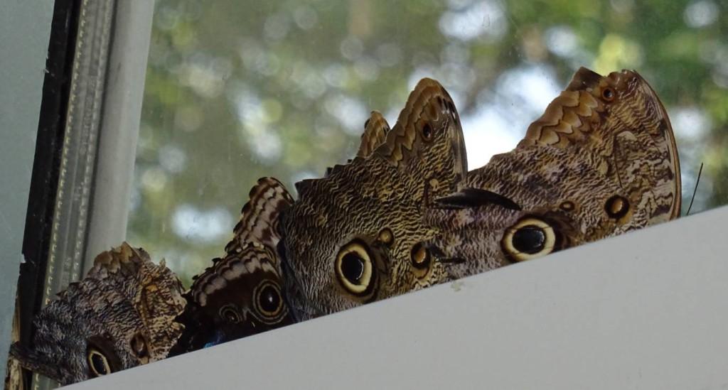 Akvariet_sommerfugler
