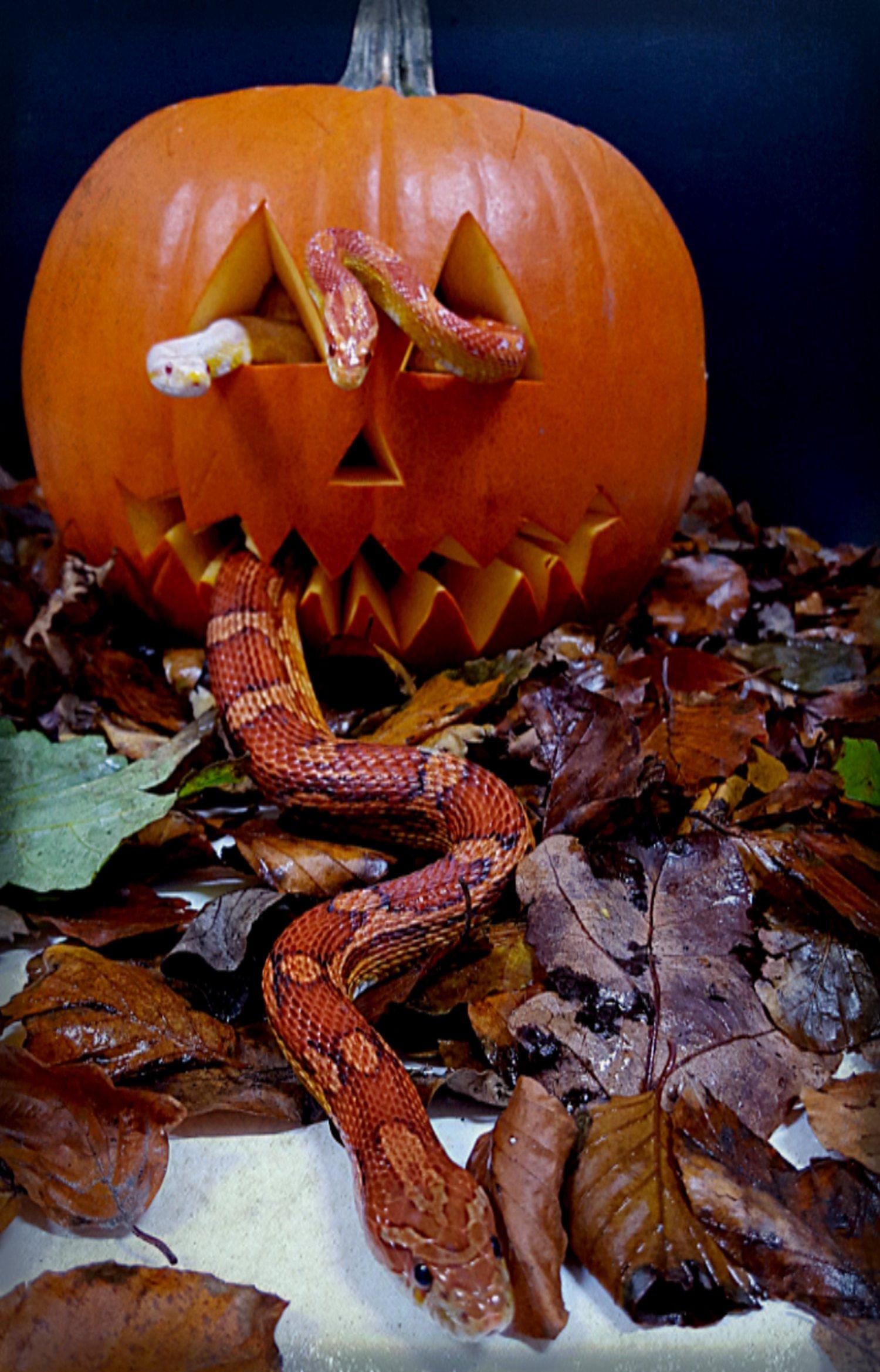 Akvariet har åpent lørdag kveld 29. oktober for Halloween-fest. Foto: Akvariet